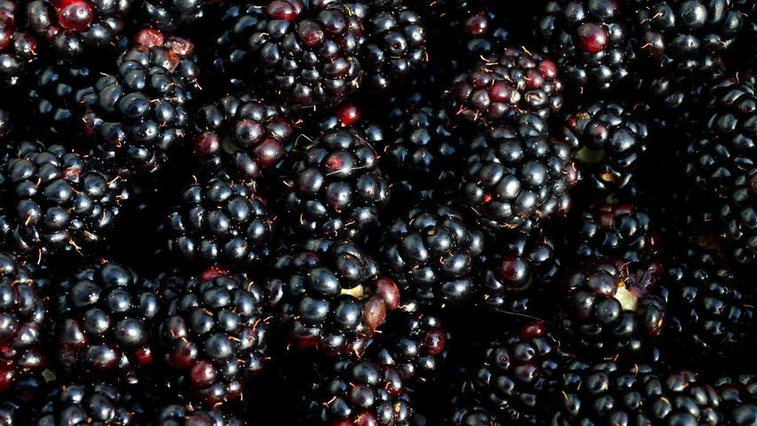 Brombeerensind lecker,gesundund kalorienarm: 100 Gramm haben nur 44 Kilokalorien. Das Beerenobst enthält wenig Zucker und ist reich an Ballaststoffen. Diese unterstützen die Darmflora und das Immunsystem.
