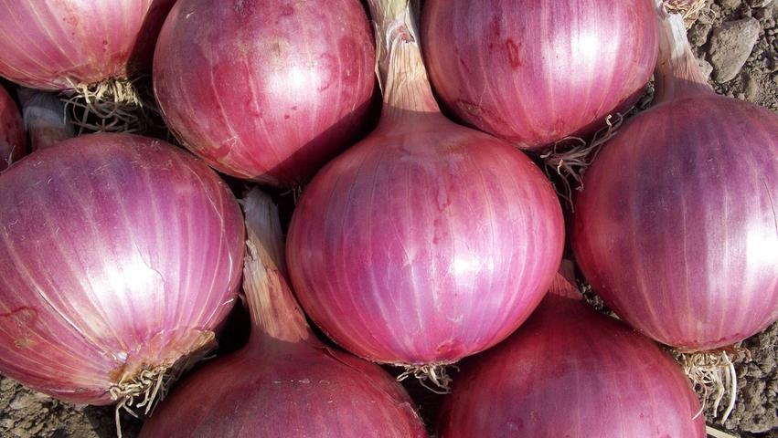 Zwiebeln wirkenentzündungshemmend und antimikrobiell und helfen bei Husten und Ohrenschmerzen. Außerdem können vor allem roteZwiebelnden Cholesterinspiegel senken. Außerdem haben im AugustBund-, Lauch- und Frühlingszwiebeln Saison.