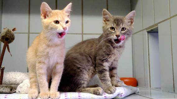 Tierheim Neumarkt: Waldi, Minka und Co. suchen ein Zuhause