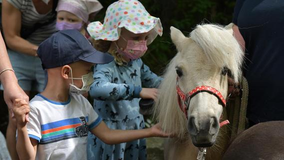 Kleine Pferde bescheren kranken Kindern in Erlangen große Freude