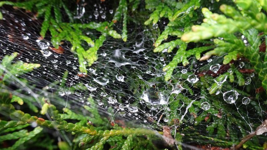Nach ergiebigem Regen fangen sich glitzernde Wassertropfen auf einem Spinnennetz.