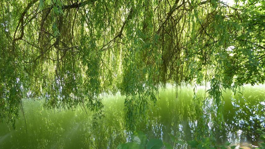 Eine grüne Oase an der Wiesent. Da sich die Bäume im Wasser spiegeln, muss man schon genau hinschauen, um den Fluss zu erkennen.
