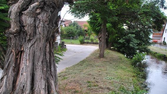 Neue Fläche für Urnengräber in Hagenbach und Pläne für die Judengasse