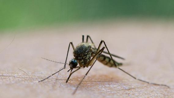 Darum gibt es diesen Sommer so viele Mücken in Bayern