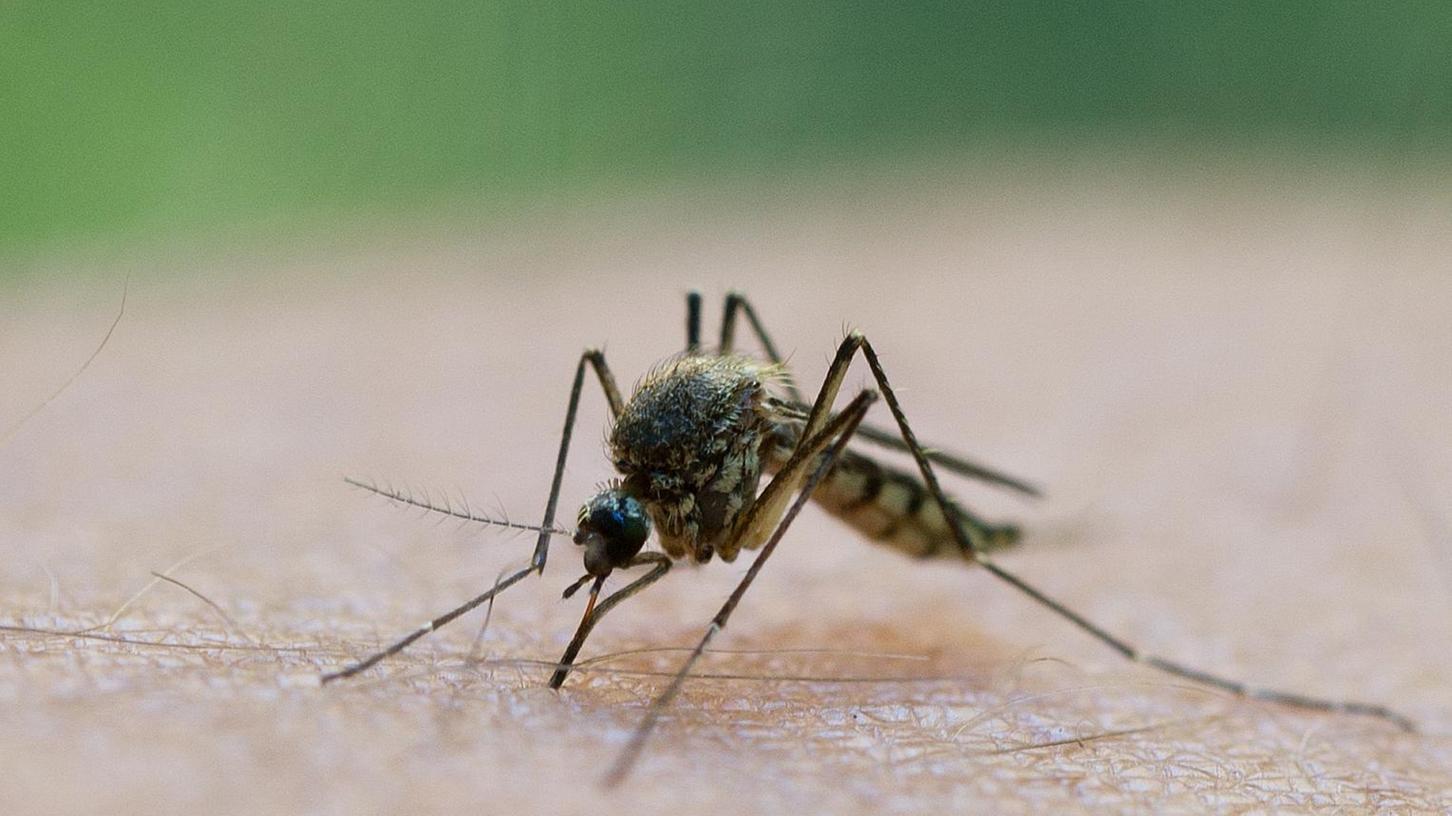 Bayernweit gibt es derzeit ein erhöhtes Mückenaufkommen.
