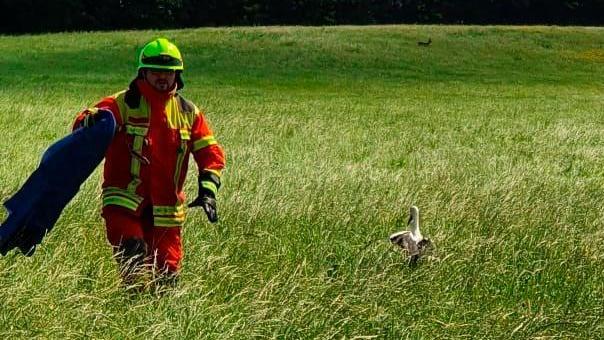 Auf einer Wiese zwischen Freystadt-Rettelloh und dem Stadtrand ließ Feuerwehrmann Alexander Kosinski den jungen Storch wieder frei.