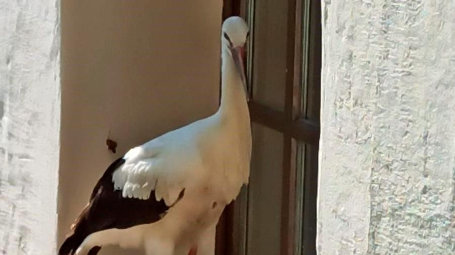 Storchen-Drama in Freystadt endet
