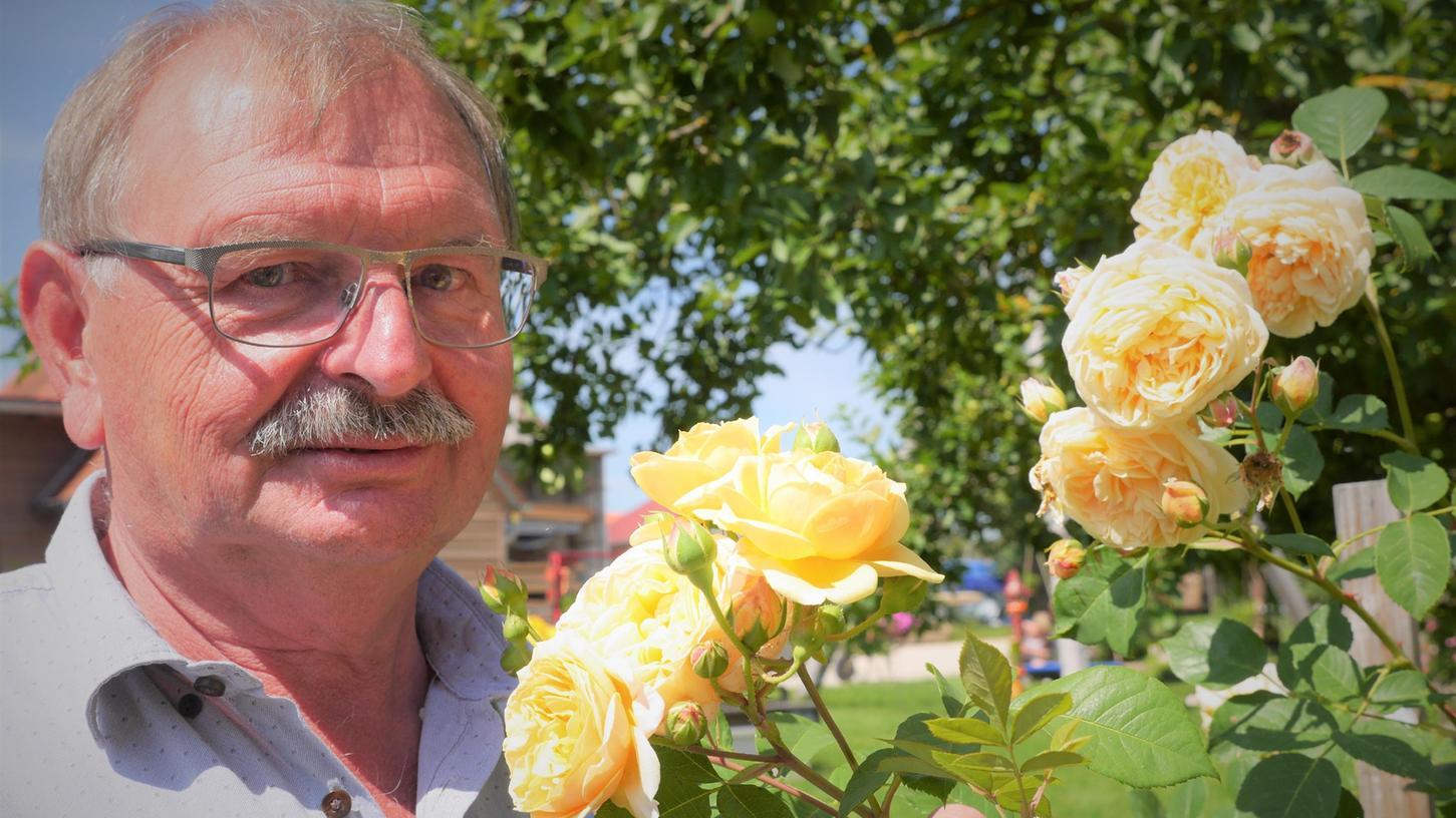 Rudi Büttner aus Sammenheim hat in seinem Garten 538 verschiedene Rosensorten. Hier sieht man ihn mit seiner englischen