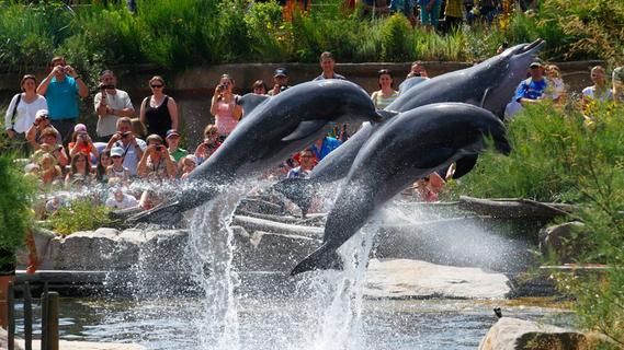 50 Jahre Delfinhaltung in Nürnberg: Warum die Tiere so wichtig für den Tiergarten sind