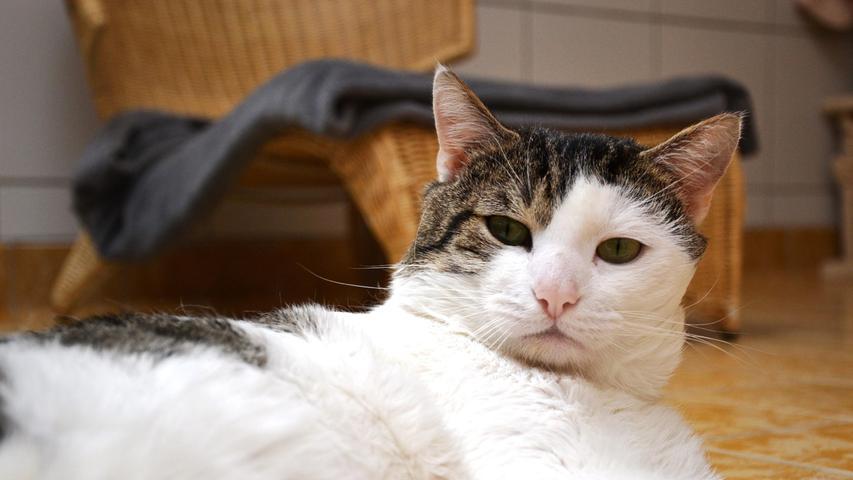Tierheim Nürnberg sucht neues Zuhause für Hund, Katze und Co