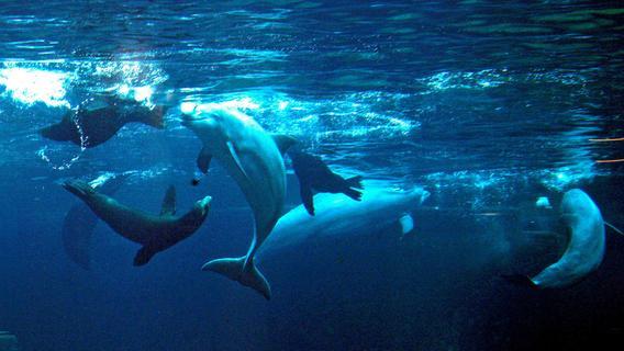 User-Umfrage: Sollten Delfine im Tiergarten Nürnberg gehalten werden?
