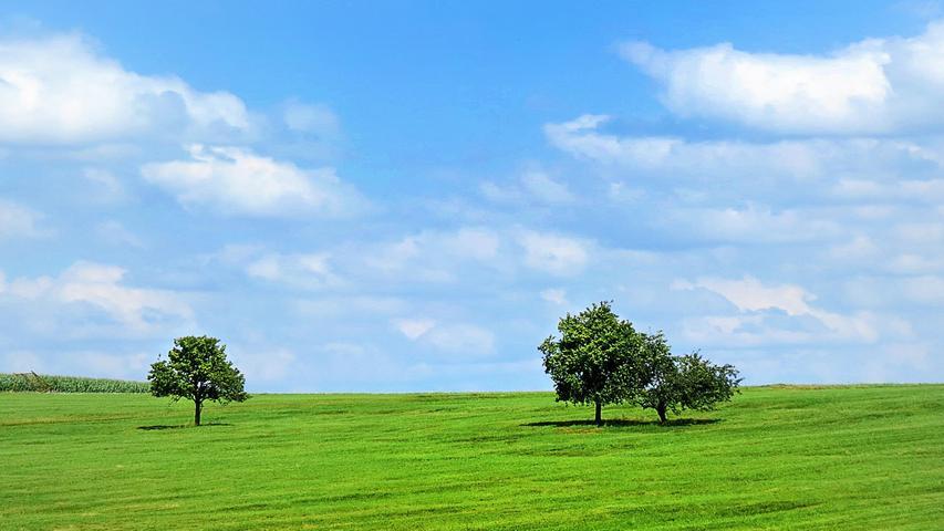 Fast könnte man im Nürnberger Land bei Schnaittach meinen, Corona bedingte Abstandsregeln gelten auch für Bäume. Auf jeden Fall haben die drei Bäume ihren festgewurzelten Platz auf der grünen Wiese und bilden ein schönes Trio vor dem heiteren Sommerhimmel.