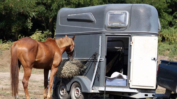 Das Pferd riss aus als es in Diepersdorf verladen werden sollte.