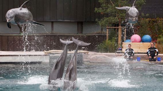 Kommentar: Warum Nürnberg an der Delfinlagune festhalten muss
