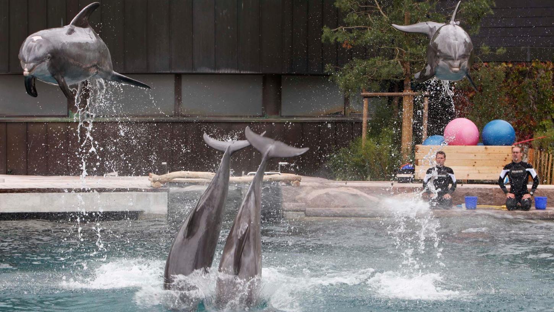 Die Delfine Moby (li.) , Noah, Jenny und Sunny damals bei der Eröffnung der Lagune in Nürnberg.