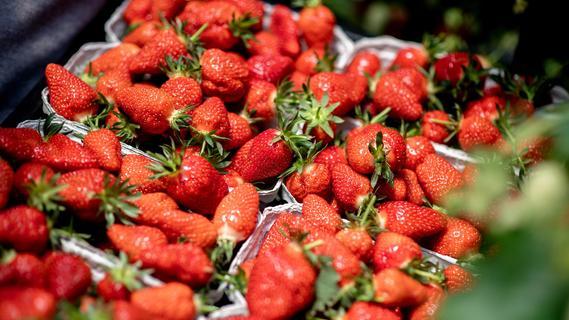 Ekelvideos: Warum jeder Erdbeer-Esser bereits Insekten verzehrt haben könnte