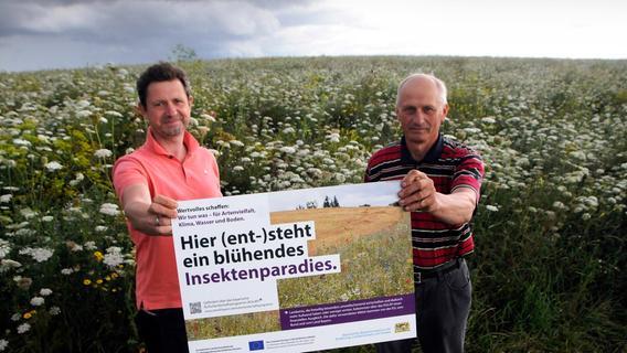 Blühende Kulap-Wiesen: Eine Freude für Spaziergänger und Insekten
