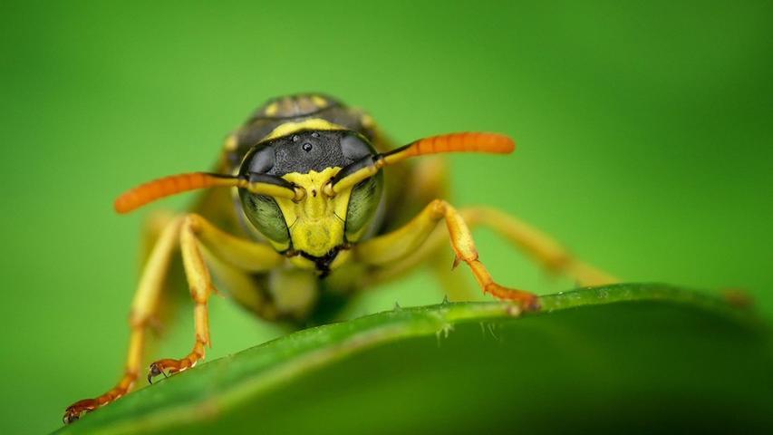 Expertin verrät: Mit diesem einfachen Trick verscheuchen Sie Wespen