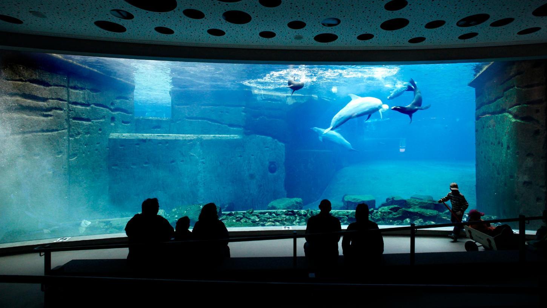 Im Blauen Salon des Nürnberger Tiergartens kann man sich am 23. und 24. August im Beisein von Delfinen gegen das Coronavirus impfen lassen.