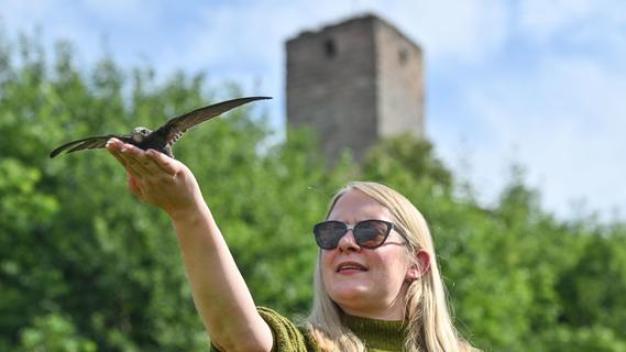 Volieren für Wildtiere bei Wallersbach sind tabu