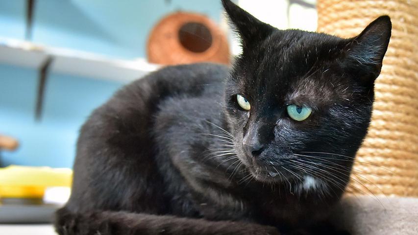Carlo kam als Fundkater ins Erlanger Tierheim. Über seine Herkunft ist praktisch nichts bekannt. Er ist aber zugänglich und verträgt sich auch mit anderen Katzen. Optimal wäre für ihn ein neues Zuhause mit täglichem Freigang.
