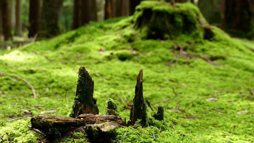 Ein Ort zum Durchatmen: Sattes Grün auf dem Waldboden.