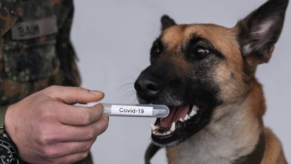 Schweißproben bei Rockkonzert: Wie Spürhunde Corona-Infektionen erschnüffeln sollen