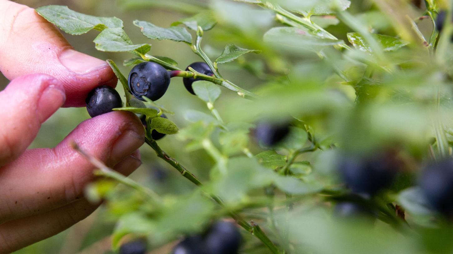 Der Mann hatte sich nach seinen Angaben in den zwei Wochen nur von Wasser und Beeren ernährt.