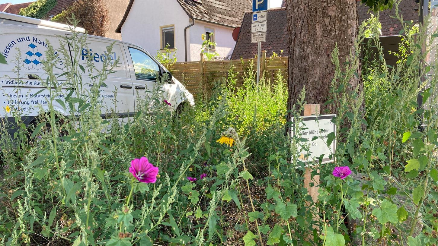 Baiersdorf will Umwelt- und Klimaschutz vorantreiben und setzt dabei auch auf Blühwiesen.