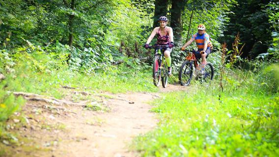 Darauf sollten Mountainbiker, Wanderer, Hundebesitzer und Pilzesammler im Wald achten