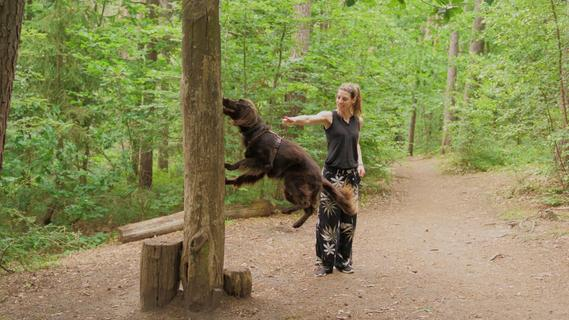 Der Hundeparcours im Fürther Stadtwald wurde erneuert