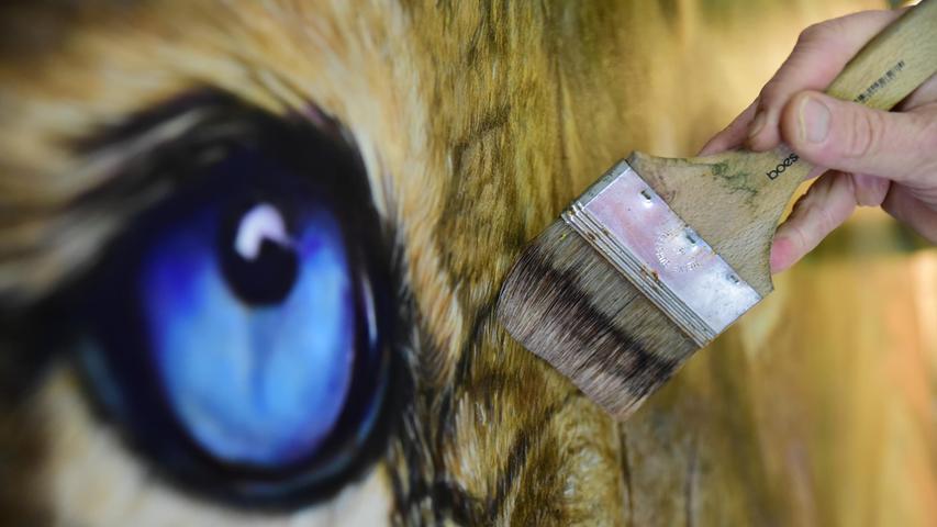 Ein Löwe mit blauen Augen.
