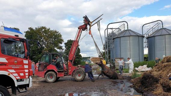 Kuh flieht vor Klauenpflege - und muss aus Güllegrube gerettet werden