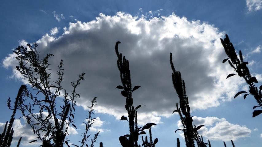 Die Gräser in der Fränkischen Schweiz klopfen scheinbar an diese riesige Wolke, hinter der sich genau die Sonne versteckt. Auch wenn es für die Wanderer ein bisschen komisch aussah: Um dieses Foto zu machen, musste ich mich auf den Rücken legen.