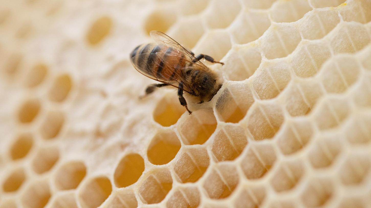 Leere Waben allerorten: In diesem Jahr produzierten Bayerns Bienen deutlich weniger Honig als in den Vorjahren.