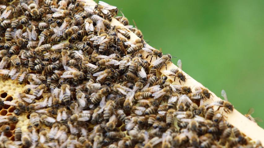 Honigernte in Forchheim: Massive Einbußen,