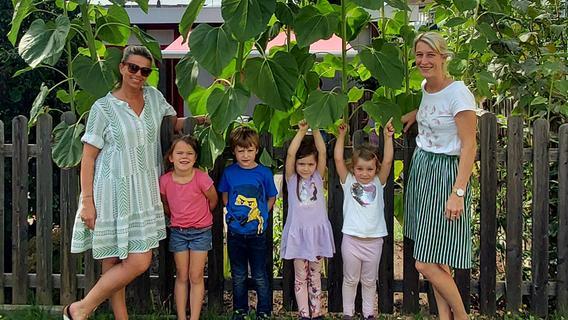 Stiele dick wie Stämme: Montessori-Kinder bestaunen ihre Sonnenblumen