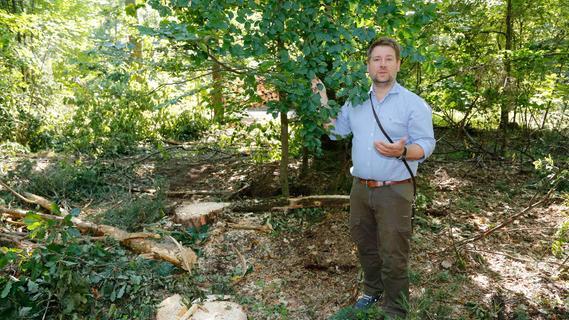 Baumfällungen im Nürnberger Reichswald: Platz für die nächste Generation