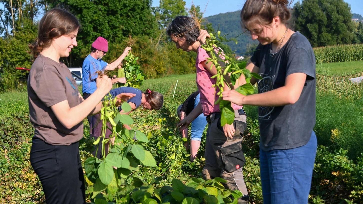 Hier wird geackert: Zu Besuch auf dem Feld der Solidarischen Landwirtschaft Ebermannstadt.