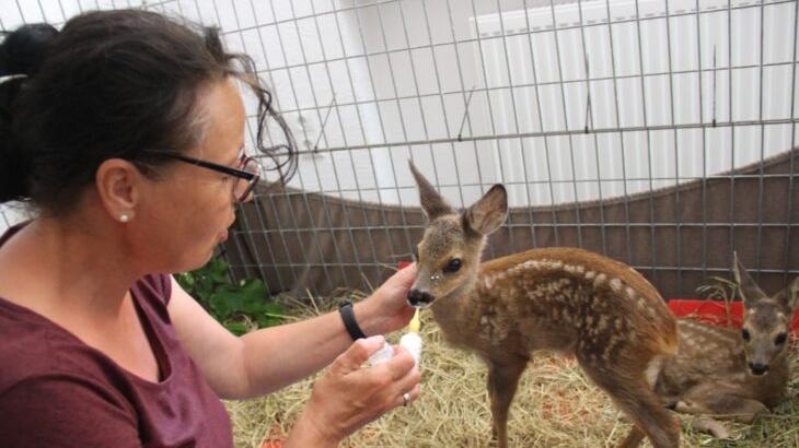 Barbara Gänsbauer war die Ersatzmutter für die beiden Rehkitze, zog sie mit der Flasche auf. Auf diesem Foto sind Rosa und Rudi vier bis fünf Wochen alt.