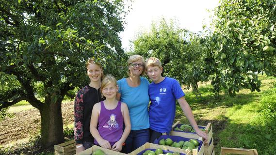 Birnenernte in der Fränkischen Schweiz: Da hilft die ganze Familie mit