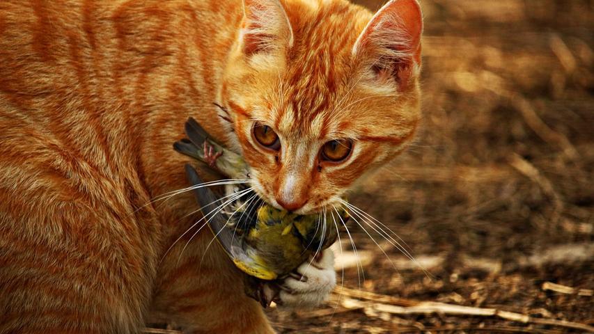 Ein Wutbeitrag: Warum mich Katzen nur noch zur Weißglut bringen