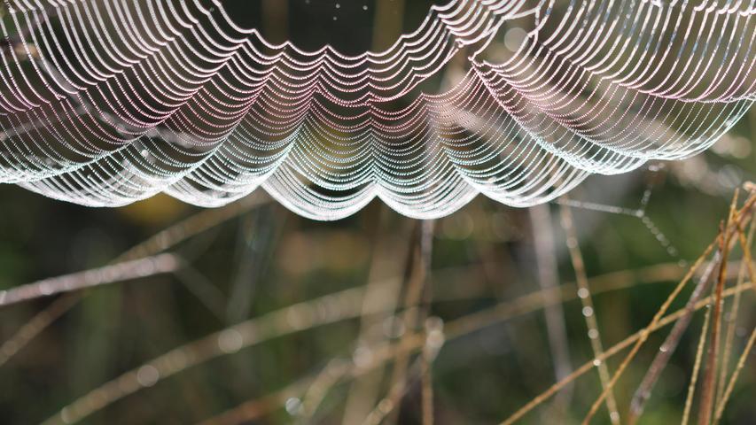 Der Altweibersommer ist in vollem Gange und beschert uns die schönsten Spinnweben! Hier die Hängepartie eines Spinnennetzes mit Tautropfen im Gegenlicht.