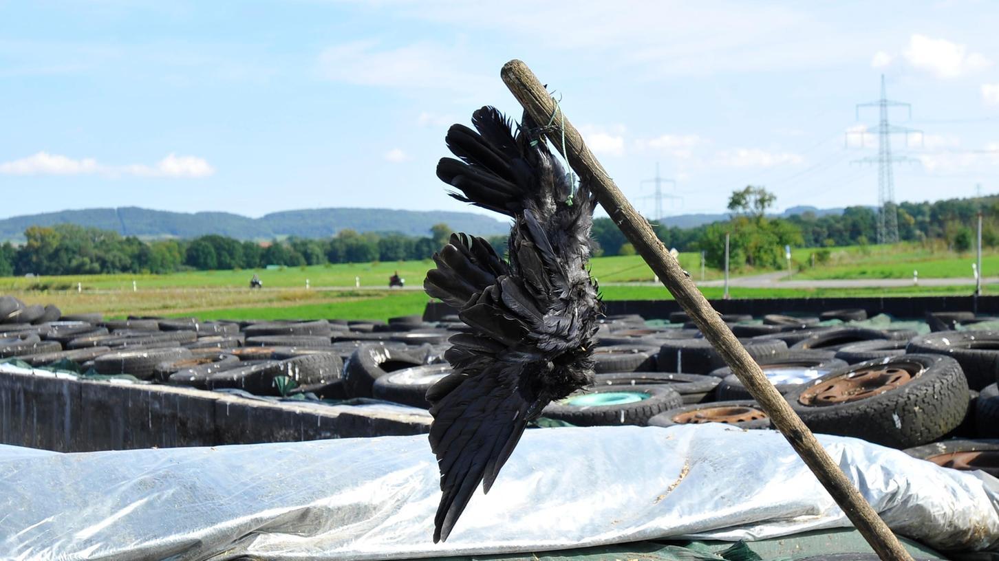 Eine tote Krähe hängt zwischen Pinzberg und Gosberg.