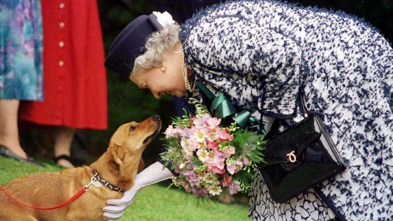 Königin Elizabeth II. liebkost einen ihrer Corgis (Archivfoto aus dem Jahr 1998). Die kurzbeinige Hunderasse ist - neben Pferden und Pferderennen - die wohl einzige Leidenschaft der britischen Monarchin.