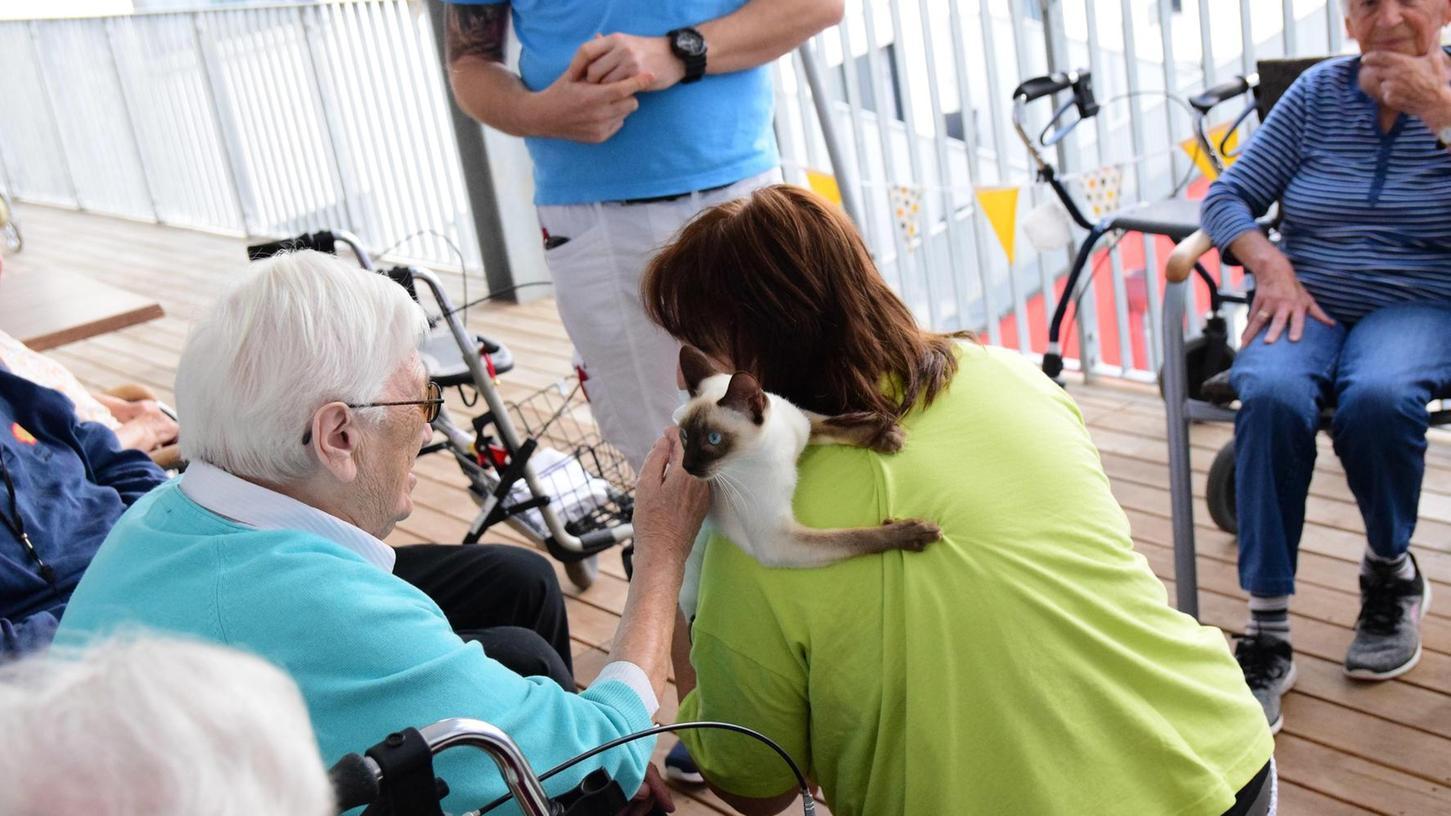 Betreuungsfachkraft Beate bringt immer wieder eine ihrer Thai-Katzen mit. Die Rasse ist für ihr extrem freundliches, aufgeschlossenes und menschenliebendes Wesen bekannt. Somit eignen sich die Tiere gut für einen Besuchsnachmittag bei den Senioren.