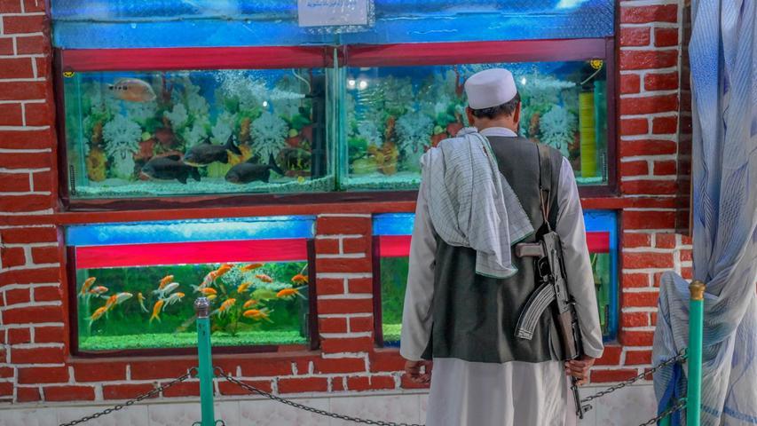 Ein Kämpfer der Taliban schaut sich ein Aquarium im Kabuler Zoo an. Ein Bild, das paradox wirkt: Denn in der Hauptstadt ist die Lage seit dem Abzug derletzten US-Truppen vor allemfür die Gegner des Regimes gefährlich.
