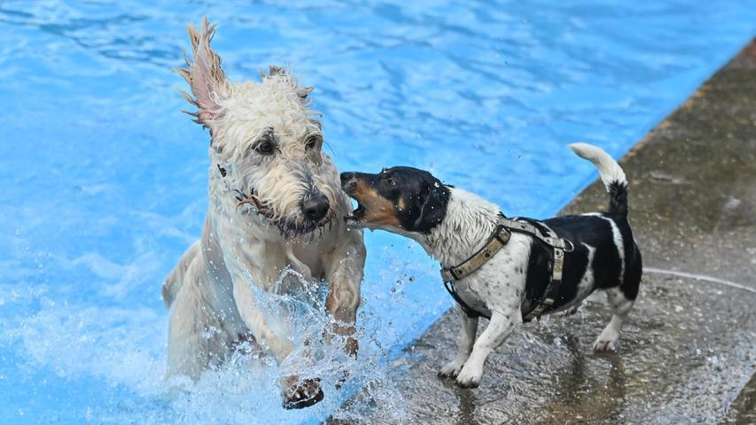 Badetag für Vierbeiner: Nasse und glückliche Hunde im Freibad