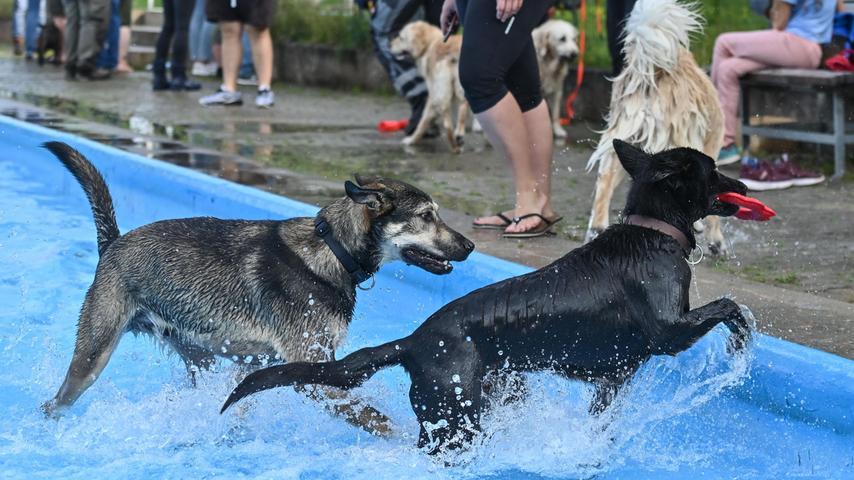 Ein Ratschlag der Profis sei zum Beispiel gewesen, den Hunden gleich zu Beginn die Leinen abzunehmen, dann würden sie sich viel besser vertragen. Und in der Tat - obwohl sich die meisten nicht kennen dürften, herrschte eine friedliche, aber ausgelassene Stimmung unter den Hunden.