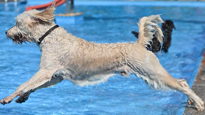 """Zum Beispiel auch bei """"Luna"""", deren Herrchen Fränk Schiller aus München angereist war. """"Nicht extra wegen dem Hundebadetag"""", so Schiller, """"meine Mutter lebt in Schwimbach, bei der bin ich gerade auf Besuch. Aber ich wollte schon seit Jahren zum Hundebadetag kommen, habe es aber bisher noch nicht geschafft""""."""